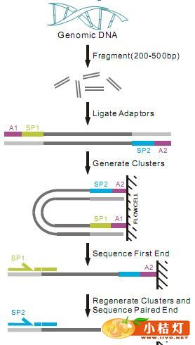 全基因组测序_基因测序技术