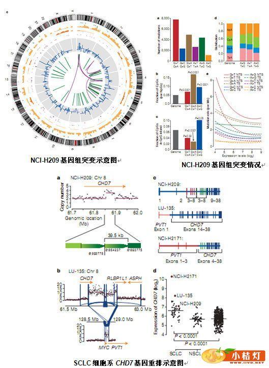 全基因组测序