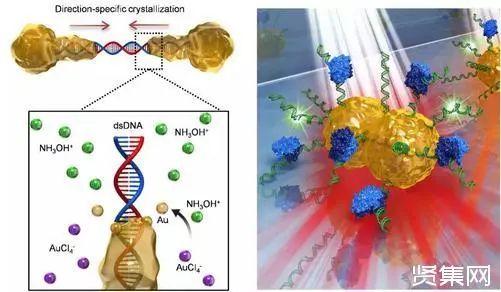日前,韩国一项研究成果实现了十几分钟内完成基因检测。研究使用纳米尺度的金颗粒制作的生物芯片识别癌细胞DNA特征,能够迅速完成对特定癌症标志物的检测,无需测序,可以识别单点基因突变。 在生命体中,DNA指导合成蛋白质。韩国高丽大学融合化工系统研究所研究教授马兴毅首次提出,可将DNA分子作为骨架,指导金纳米颗粒的合成,相关成果在2016年发表于《自然通讯》。最近,马兴毅及其所在团队联合首尔国立大学和美国科罗拉多大学的学者利用DNA分子调控合成出结构预先设计的高灵敏金纳米颗粒,实现了对乳腺癌相关基因中单点突变的